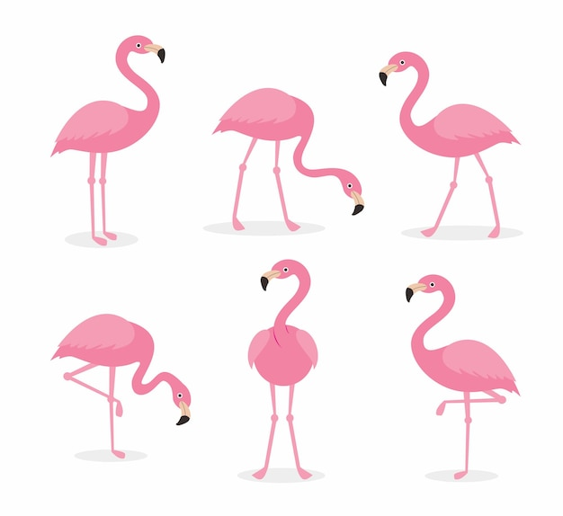 Ensemble de collections de dessins animés flamingo