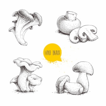 Ensemble de compositions de champignons de style croquis dessinés à la main. champignon aux coupes, huîtres, girolles et cèpes.