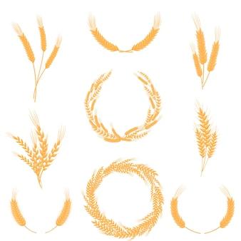 Ensemble de compositions d'épis de blé jaune mûr. illustration sur fond blanc.