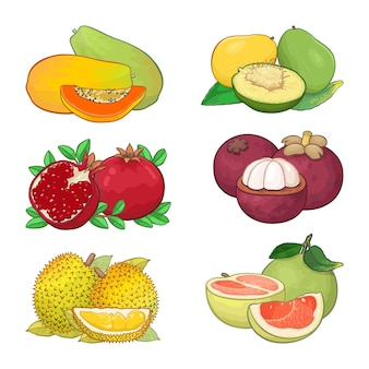 Ensemble de conception d'illustration de fruits tropicaux