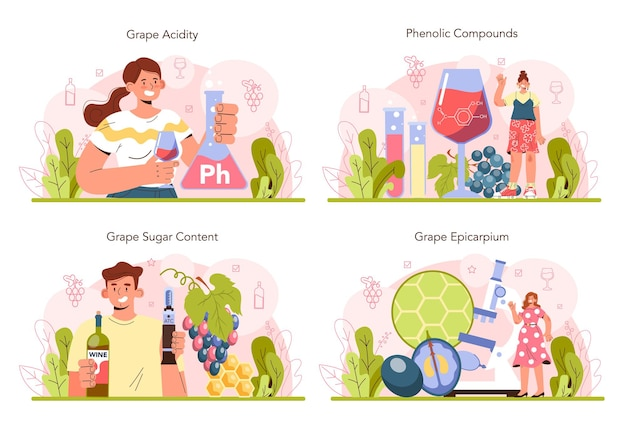Ensemble de concepts de production de vin. vin de raisin en bouteille ou en verre. caractéristiques des boissons alcoolisées. sélection des raisins, acidité et teneur en sucre. illustration vectorielle plane