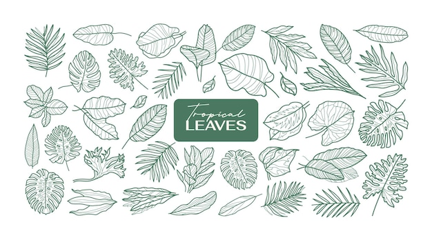 Ensemble de contour d'icône de feuilles tropicales. collection de vecteur de fleurs minimales.