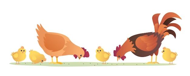 Ensemble de coq poule et poussins mangeant illustration