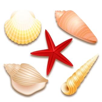 Ensemble de coquillages et étoile de mer rouge