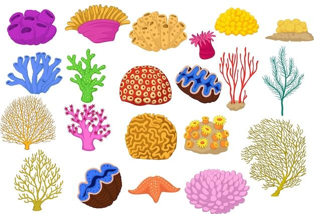 Ensemble de coraux colorés