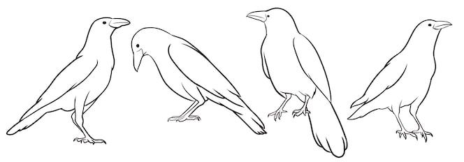 ensemble de corbeau dessiné à la main