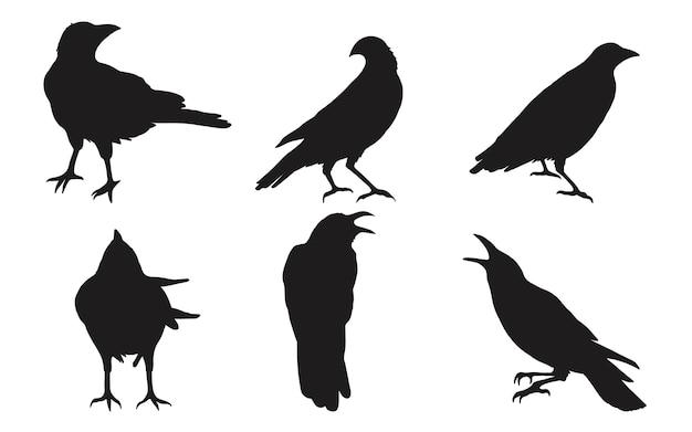 Ensemble de corbeau sur fond blanc.