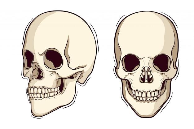 Ensemble de crâne humain dessiné à la main