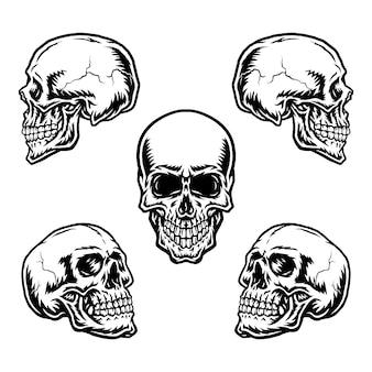Ensemble de crânes dans différentes positions