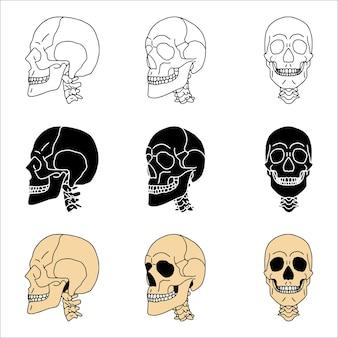Ensemble de crânes dans différents styles.