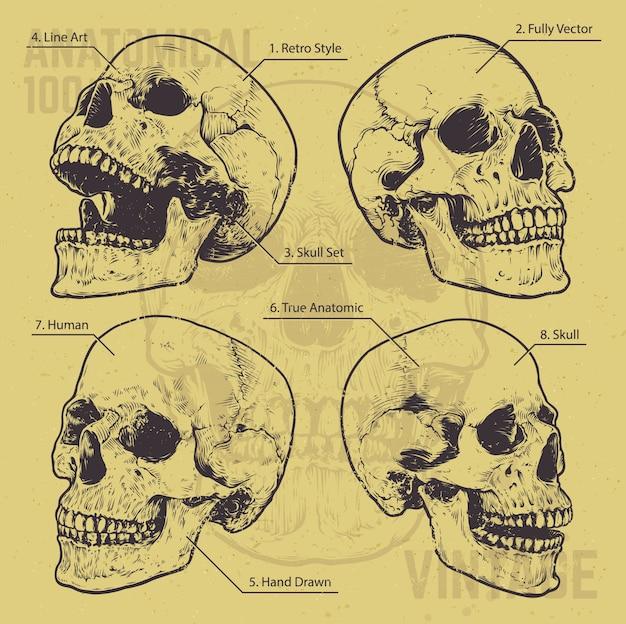 Ensemble de crânes dessinés à la main