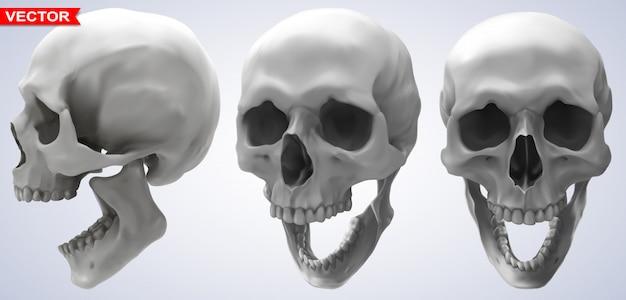 Ensemble de crânes humains photoréalistes graphiques détaillés