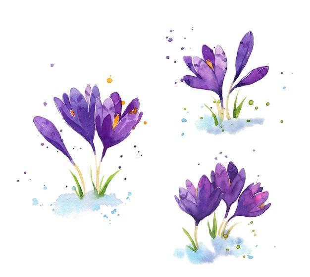 Ensemble de crocus aquarelles, illustration de fleurs au début du printemps