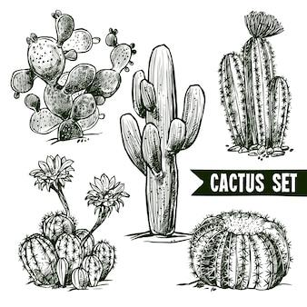 Ensemble de croquis de cactus