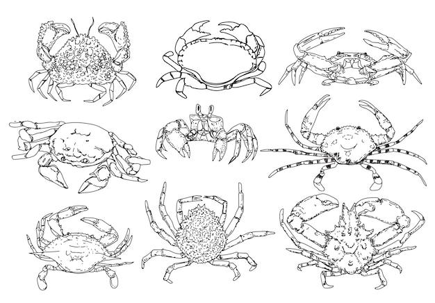 Ensemble de croquis de crabe
