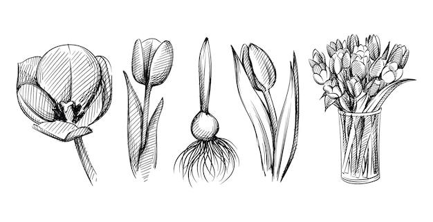 Ensemble de croquis dessinés à la main de fleurs de tulipes sur fond blanc. ampoule de tulipes. bouquet de tulipes dans un vase en verre