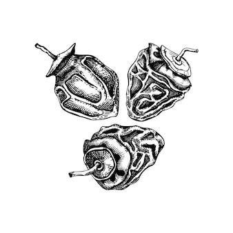 Ensemble de croquis de fruits kaki séchés dessinés à la main. vintage kakis déshydratés dans un style gravé. délicieux dessert sain. illustrations réalistes de bonbons orientaux.
