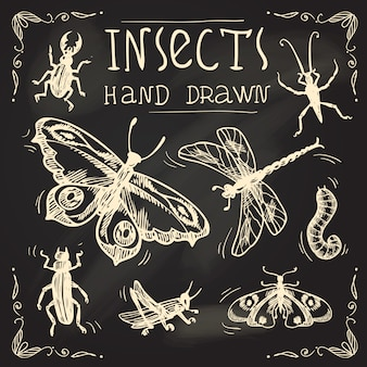 Ensemble de croquis d'insectes