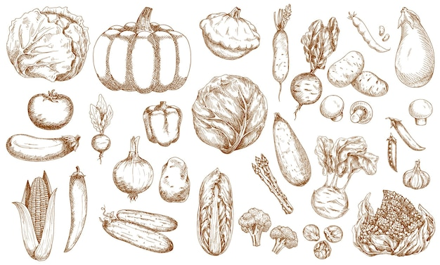 Ensemble de croquis de légumes, de verdure et de légumes de la ferme