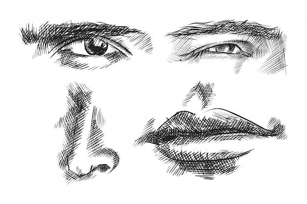 Ensemble de croquis de parties faciales dessinées à la main. l'ensemble se compose de sourcils et yeux regardant droit, sourcils et yeux regardant vers la droite, nez, bouche fermée
