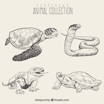 Ensemble de croquis de reptiles