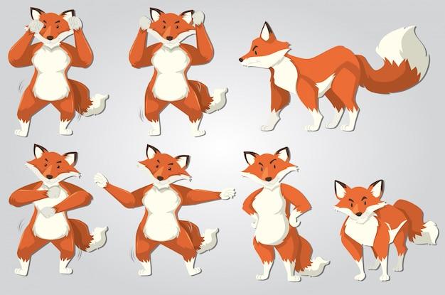 Ensemble de danse du renard