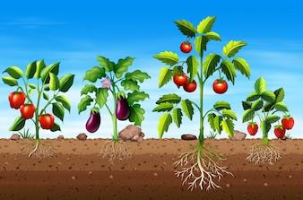Ensemble de différentes plantes de légumes et de fruits