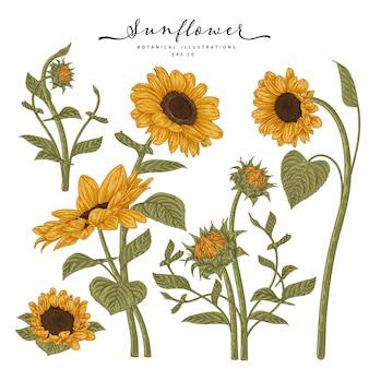 Ensemble décoratif floral de croquis. dessins de tournesol.