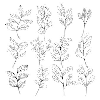 Ensemble de dessin au trait de fleurs sauvages de griffonnage de feuilles botaniques