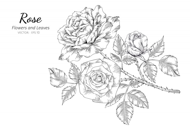 Ensemble de dessin fleur rose avec illustration au trait