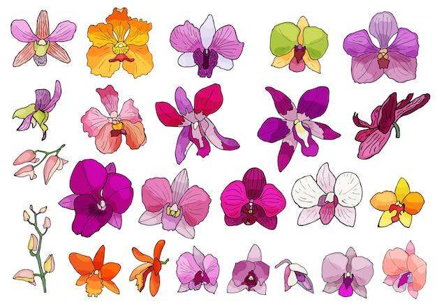 Ensemble dessiné à la main de fleurs d'orchidées.