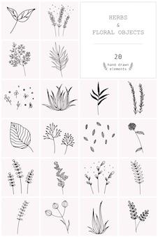 Ensemble dessiné à la main d'herbes de vecteur et d'objets floraux.