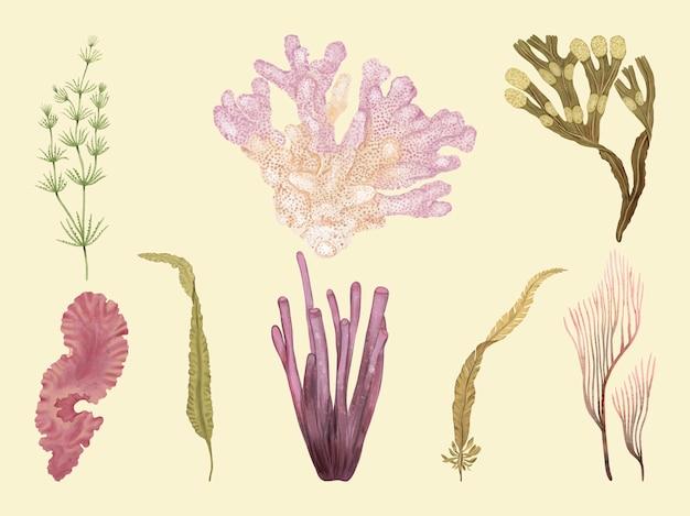 Ensemble dessiné à la main de plantes sous-marines