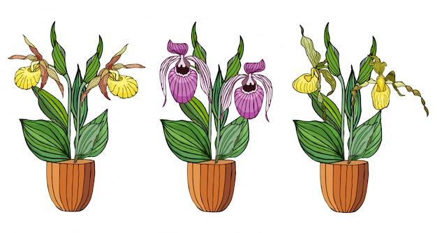 Ensemble dessiné d'orchidées en pots de fleurs à la main.