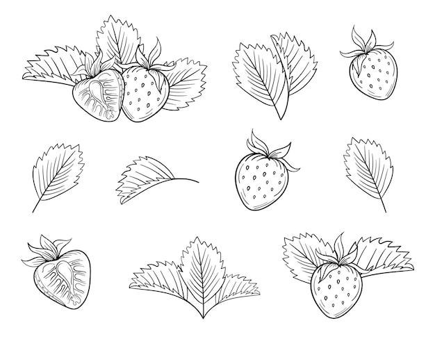 Ensemble de dessinés à la main isolé aux fraises