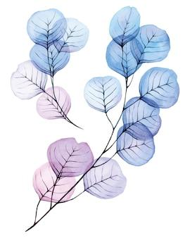 Ensemble de dessins à l'aquarelle de feuilles transparentes et de branches de couleur bleu et rose d'eucalyptus