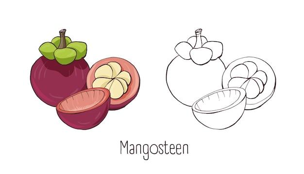 Ensemble de dessins de contours colorés et monochromes de mangoustan entier et coupé