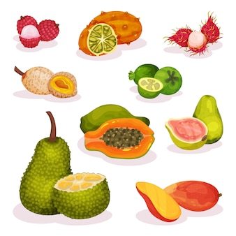 Ensemble détaillé de divers fruits exotiques. nutrition végétarienne. nourriture biologique et savoureuse. alimentation équilibrée