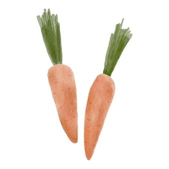 Ensemble de deux carottes lumineuses à l'aquarelle.