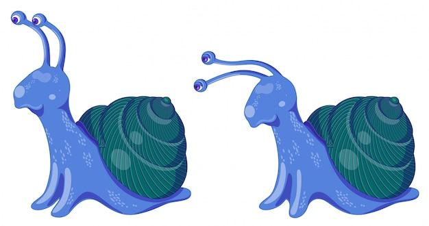 Ensemble de deux escargots de vecteur