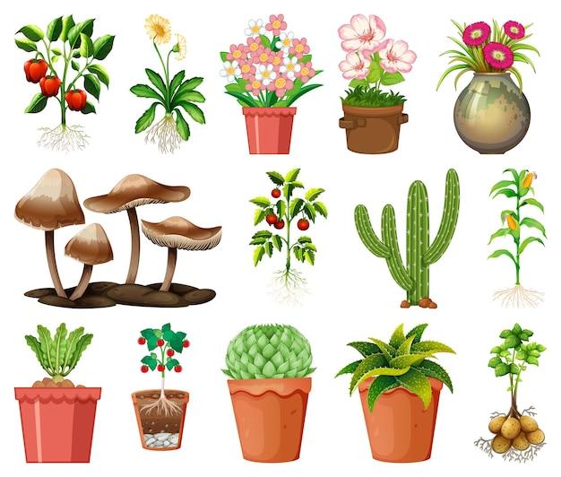Ensemble de différentes plantes en pots isolé sur fond blanc