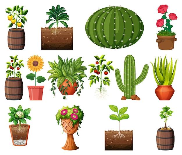 Ensemble de différentes plantes en pots isolés sur fond blanc