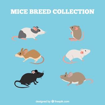 Ensemble de différentes races de souris