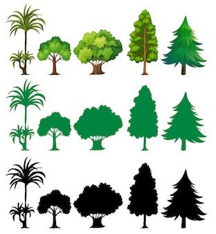 Ensemble de différents arbres