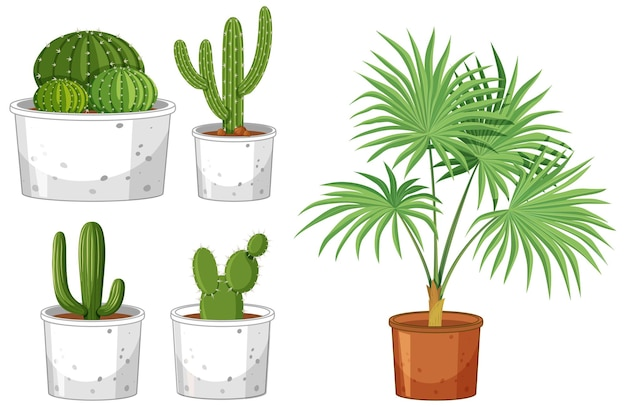 Ensemble de différents cactus en pot sur blanc