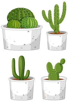 Ensemble de différents cactus en pot sur fond blanc