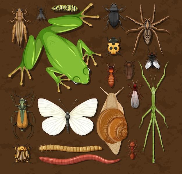 Ensemble de différents insectes sur fond en bois