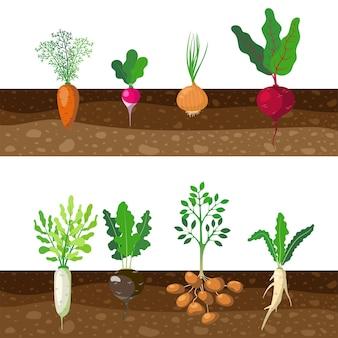 Ensemble de différents légumes enracinés qui poussent sous terre. illustration de dessin animé