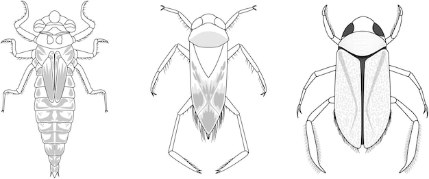 Ensemble de différents types d'insectes et de coléoptères