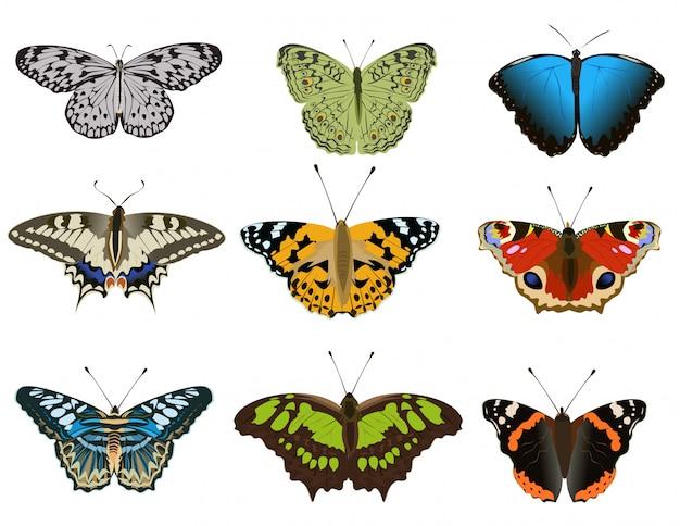 Ensemble de divers types de papillons colorés sur fond blanc